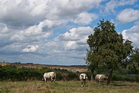Nostalgisch Limburgs Land