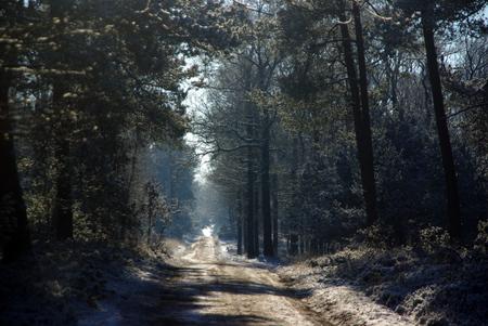 """Winterlicht - Dit jaar had ik nog geen wintertafereel geplaatst. Deze is gemaakt in het kroondomein """"Het Loo""""bij Hoog Soeren. - foto door w.zijlstra10 op 24-02-2012 - deze foto bevat: trimmers, het loo, Hoog Soeren"""