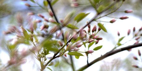 spring vibration