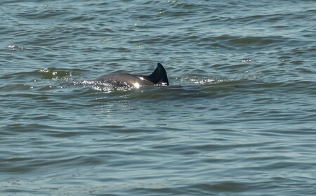 Bruinvissen ..... - doken3 x naast ons op ...de schippers zoon hielp ons uit de droom geen dolfijnen maar bruinvissen.....kreeg nog net een vin in beeld................. - foto door j.bosch.01 op 10-08-2018 - deze foto bevat: water, natuur, dieren, wildlife, bruinvis