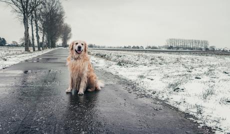 Jess in de sneeuw