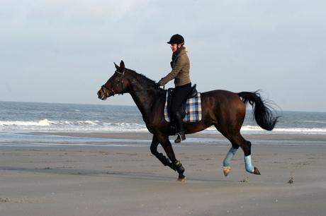 Horse riding on the beach 2