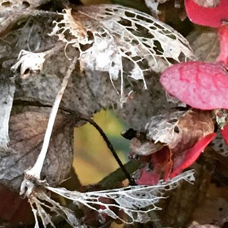 VERVAL - detail foto, gemaakt in mijn tuin. - foto door Kleur-rijk op 25-11-2018 - deze foto bevat: groen, macro, natuur, geel, herfst, tuin, blad, verval