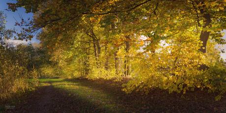 Herfst aan 't Hilgelo