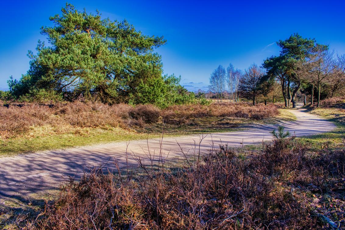 De Borkeld - Bospad op de Borkeld te Markelo. - foto door mkoldewijn op 27-02-2021