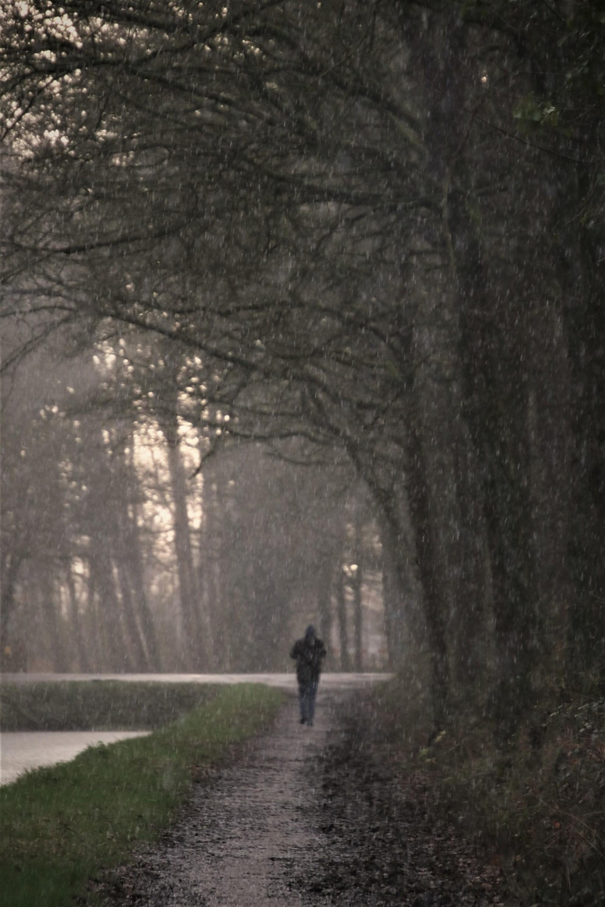 hagelbui - wandelaar in een hagelbui  de winter in alle facetten 18-1-2020 - foto door mieke58 op 18-01-2020 - deze foto bevat: boom, water, natuur, druppel, winter, ijs, landschap, bos, koud, nederland, hagelbui, wandelaar