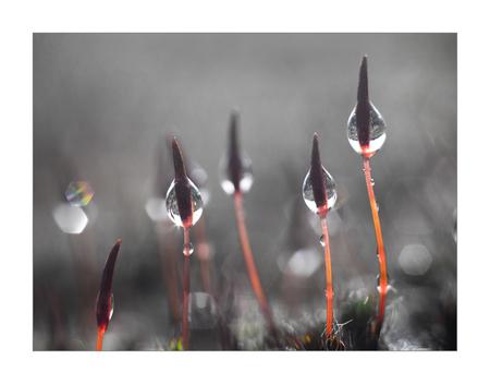 haarmos - Deze foto heb ik gemaakt met een pentacon lens en een tussenring... - foto door RGZ op 26-02-2021 - deze foto bevat: voorjaar, bokeh, haarmos, pentacon, vintage lens
