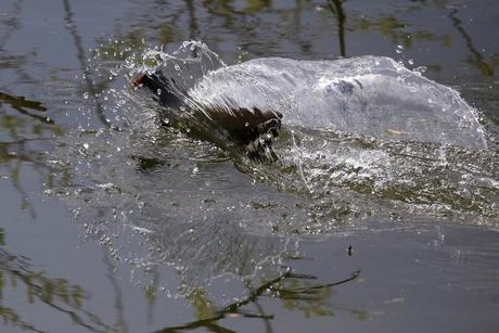 Waterhoentje