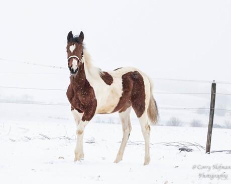 een beauty in de sneeuw