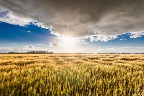 Frans landschap in de polder