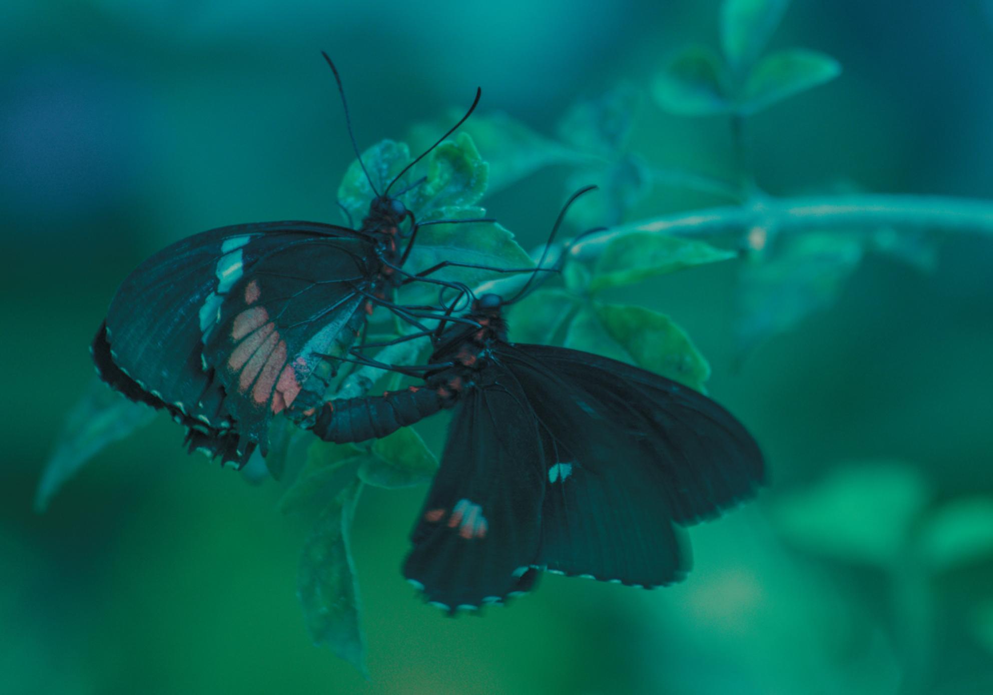 New episode - liberté fotografie - - - foto door Houda op 23-04-2018 - deze foto bevat: macro, lente, natuur, vlinder, romantiek, intiem, vlindertuin, bokeh - Deze foto mag gebruikt worden in een Zoom.nl publicatie