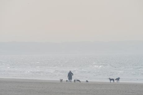 Hondenliefhebber