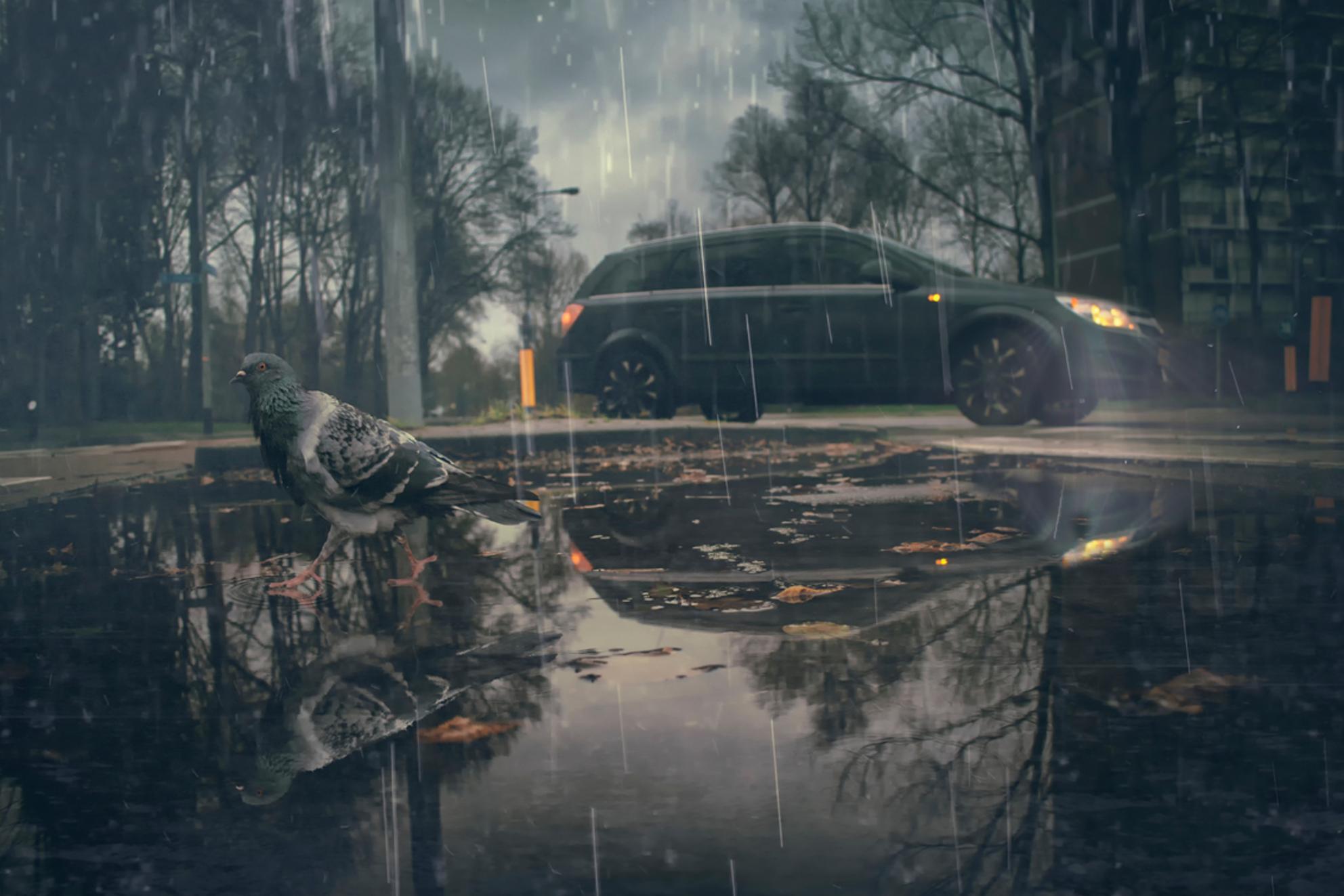 Bye, it's raining cats and dogs out here. - - - foto door Elianne92 op 22-12-2018 - deze foto bevat: straat, water, druppel, licht, humor, spiegeling, duif, auto, reflecties, straatfotografie