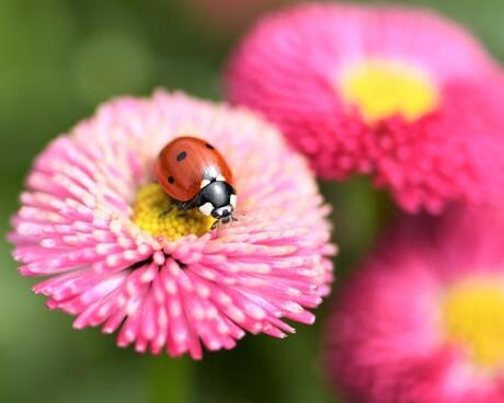 In de tuin (1)