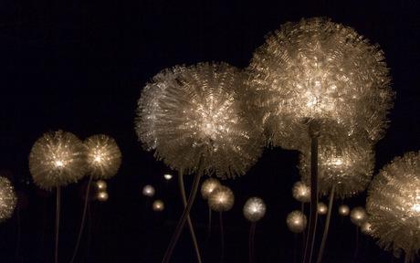 Dandelion op Glow 2015