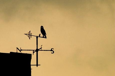 Kijk eens naar het vogeltje.