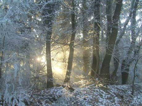 winter dec 2007(1).JPG
