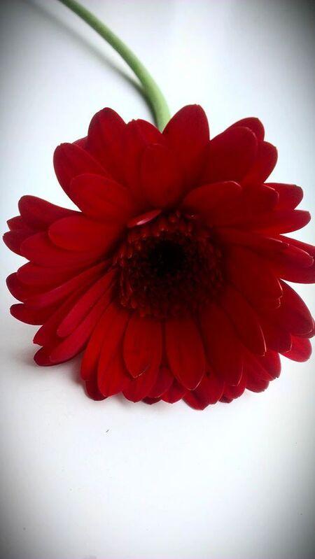 Red Flower - Rode bloem (soort voor mij niet bekend, ben geen bloemen kenner). - foto door MoenePhotography op 19-06-2014 - deze foto bevat: macro, bloem, lente, natuur, licht, tuin, zomer, voorjaar, nederland