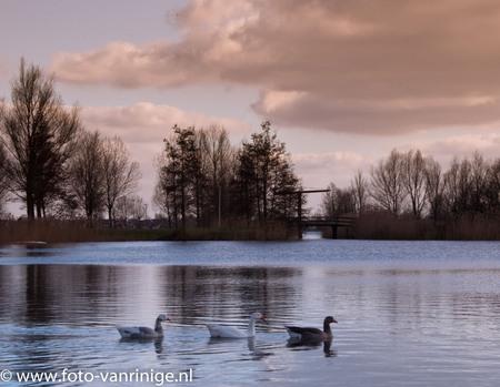 ganzen op de rietplas - Deze foto is genomen in Emmen....de rietplassen - foto door zorbus op 05-03-2011 - deze foto bevat: ganzen