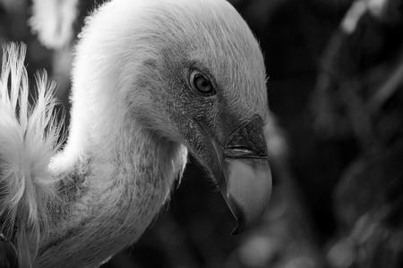 Gier - - - foto door lalalalisaaa op 12-04-2015 - deze foto bevat: dierentuin, dieren, vogel