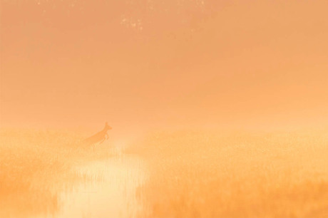 misty morning jump