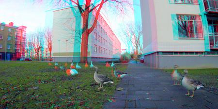 Prinsenlaan Rotterdam 3D GoPro - Prinsenlaan Rotterdam 3D GoPro 20cm  basis anaglyph stereo red/cyan - foto door hoppenbrouwers op 26-12-2020 - deze foto bevat: rotterdam, ganzen, 3d, anaglyph, stereo, gopro, prinsenlaan