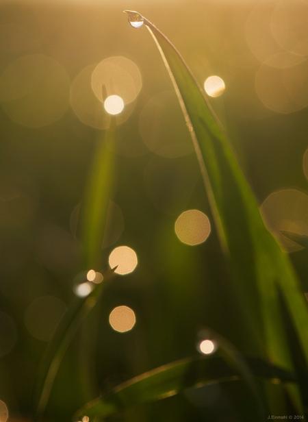 Dauwdruppels -2 - Gelijk aan de vorige foto. Zelfde werkwijze. - foto door j.einmahl op 29-03-2014 - deze foto bevat: lente, druppel, licht, blad, duinen, voorjaar