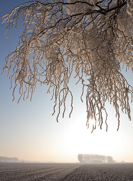 zeeuwsvlaams-winterlandschap