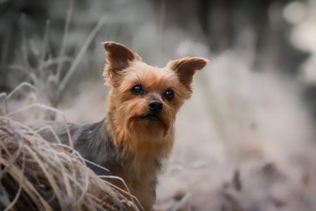 hond in winters landschap