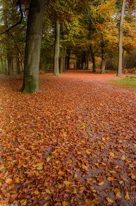 Bos met een mooi oranje deken