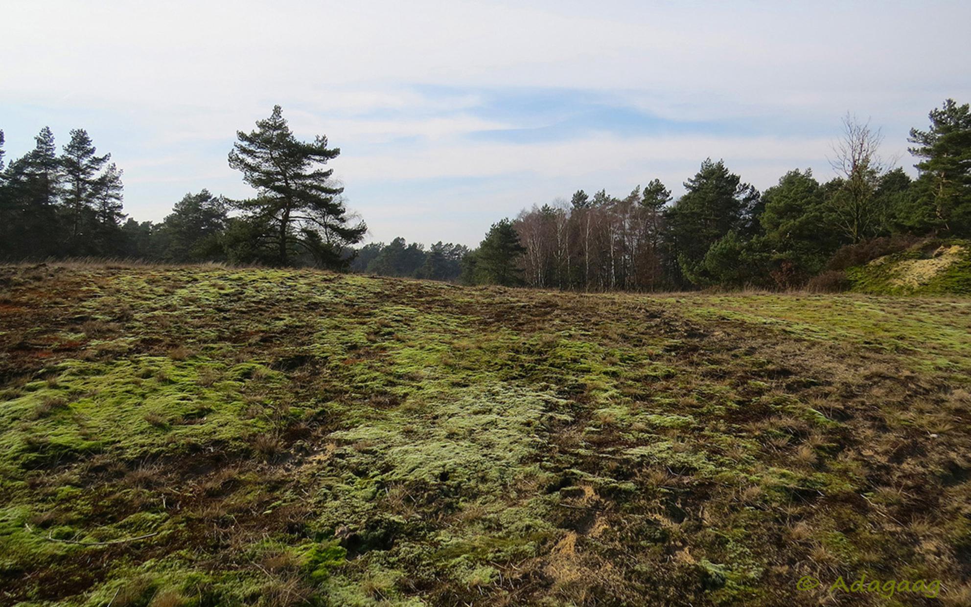Mossige helling - - - foto door adagaag op 11-03-2015 - deze foto bevat: groen, natuur, mos, winter, landschap, heide, duinen, bomen - Deze foto mag gebruikt worden in een Zoom.nl publicatie