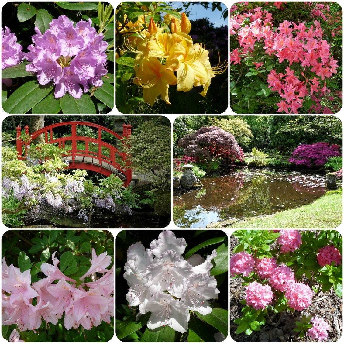 Collage PINK RIBBON nr14 Park Clingendael 22mei 2017 - Hallo Zoomers . GROOT kijken en even lezen . De maand OKT  Pink Ribbon maand  is al bijna voorbij dus plaats ik vandaag de Laatste TWEE   Pink Ribbon - foto door jmdries op 31-10-2017 - deze foto bevat: groen, boom, bloem, natuur, landschap, bos