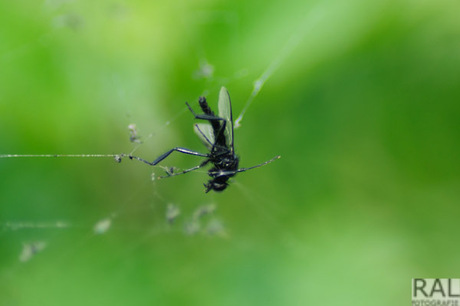 the fly in to the web