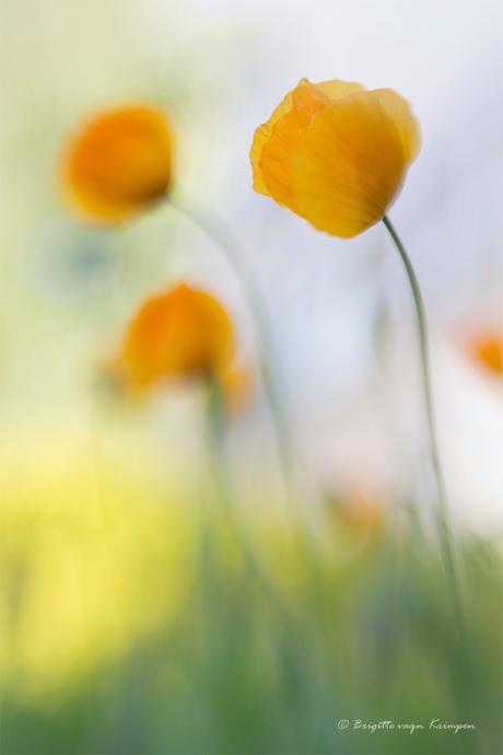 Orange Impressionism
