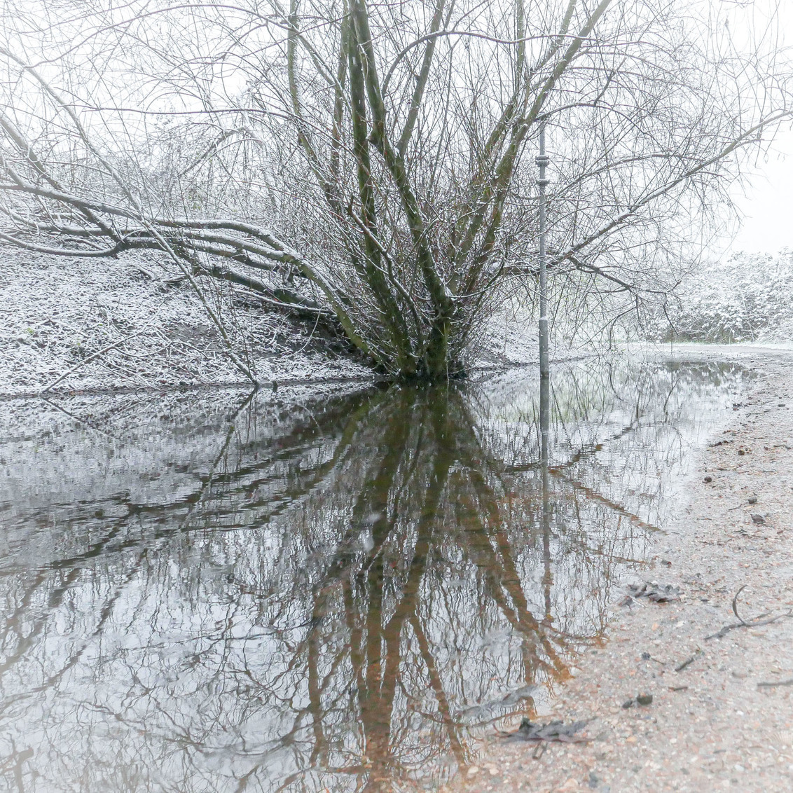 Spiegeling - Een grote plas heeft zo z'n voordelen.  Bedankt voor de fijne reacties bij 'eindelijk' en 'alle ballen verzamelen'. - foto door convust op 20-01-2021 - deze foto bevat: boom, natuur, park, sneeuw, winter, spiegeling, plas