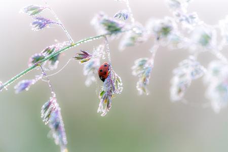 Even the tiniest things can be miracles - Vandaag even nieuwe macrolens uitgeprobeerd; wat is het toch mooi om mee te werken.   Hier een foto van een lieveheersbeestje in de frisse ochtend - foto door Alex-Maas1 op 21-06-2020 - deze foto bevat: groen, rood, macro, bloem, water, natuur, lieveheersbeestje, druppel, licht, tegenlicht, insect, dauw, fresh, dof, zacht, pastel, bokeh, pastelkleuren, soft focus