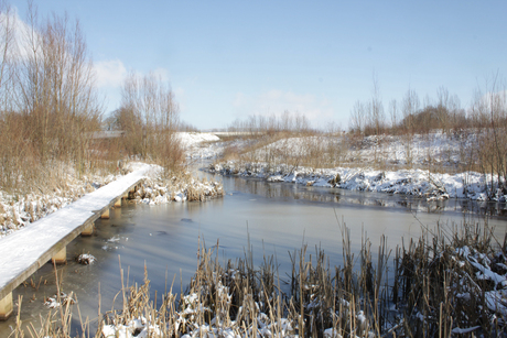 winter in het park