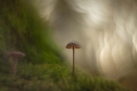 Mistic Autumn