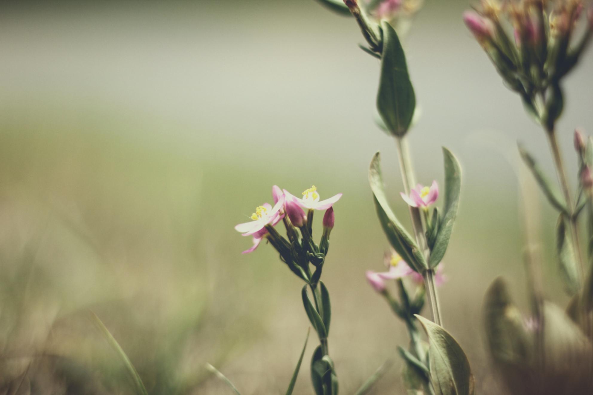 wilde bloemen - - - foto door KatrienD op 30-06-2017 - deze foto bevat: groen, bloem, natuur - Deze foto mag gebruikt worden in een Zoom.nl publicatie