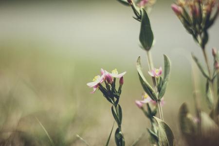 wilde bloemen - - - foto door KatrienD op 30-06-2017 - deze foto bevat: groen, bloem, natuur