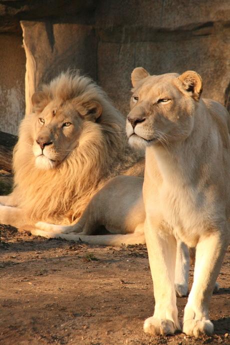 17-02-08 ouwenhands dierenpark - rhenen 6