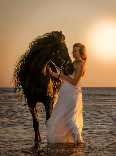 Fries paard op het strand
