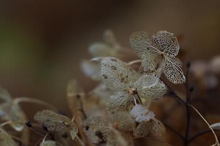 Dag Anabel.... - Zijn laatste structuur.. - foto door pietsnoeier op 22-11-2015 - deze foto bevat: macro, bloem, natuur, herfst, dof, bokeh, Anabel