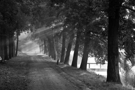 Westerpark in de mist