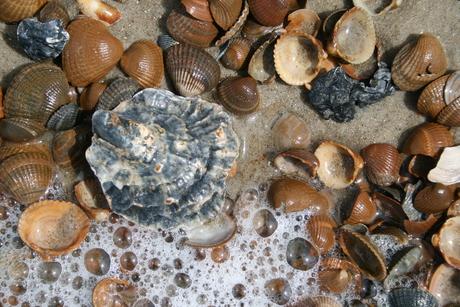 Oesterschelp en zeeschuim