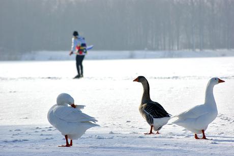 Birds & Skaters