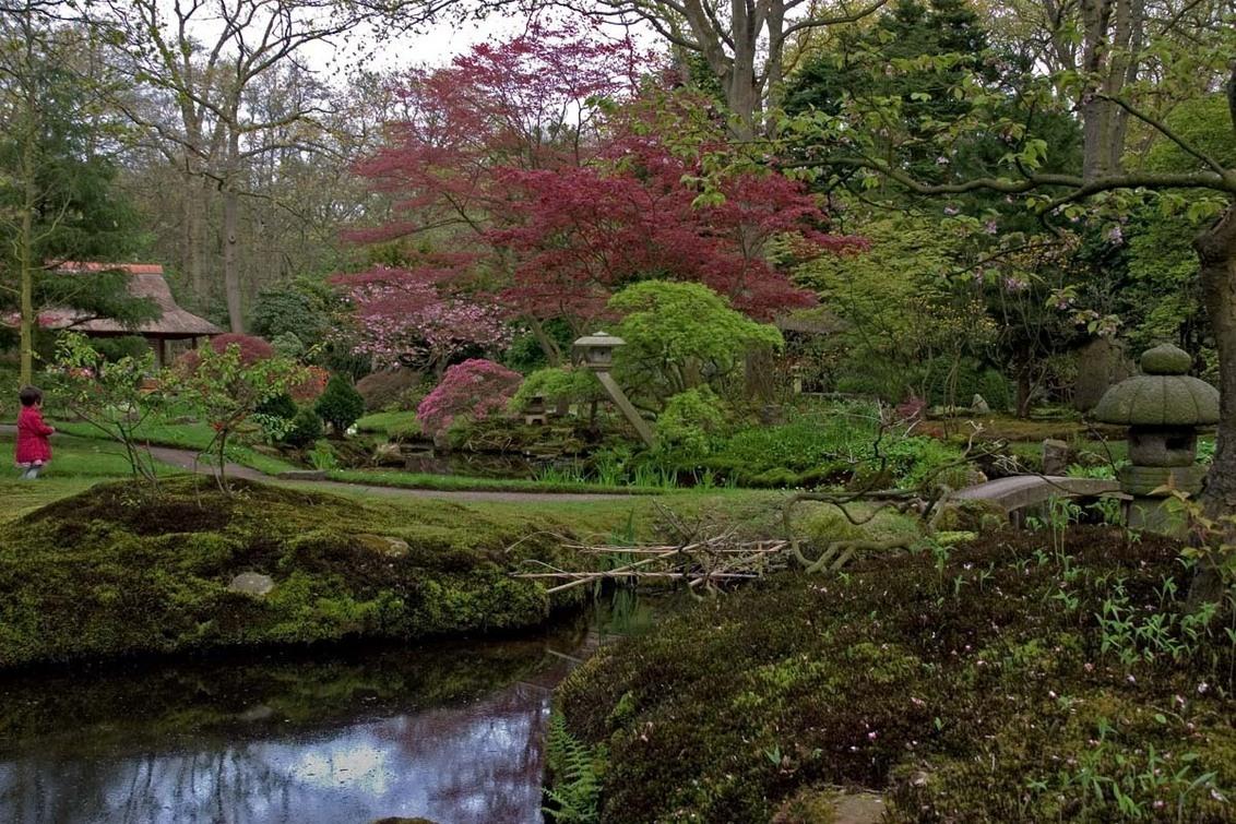 Japanse tuin - Afgelopen 30 april ging de Japanse tuin open en gezien het Koninginnedag was vond ik het een prima dag om een bezoekje er aan te brengen met het idee - foto door Dodsi op 04-05-2012 - deze foto bevat: roze, natuur, klein, tuin, mos, clingendael, meisje, fijn, azalea, bonsai, jasje, Den Haag, Japanse tuin, Japaans