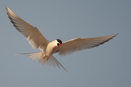 Een pittige vogel