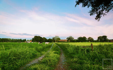 Vlaams landschap