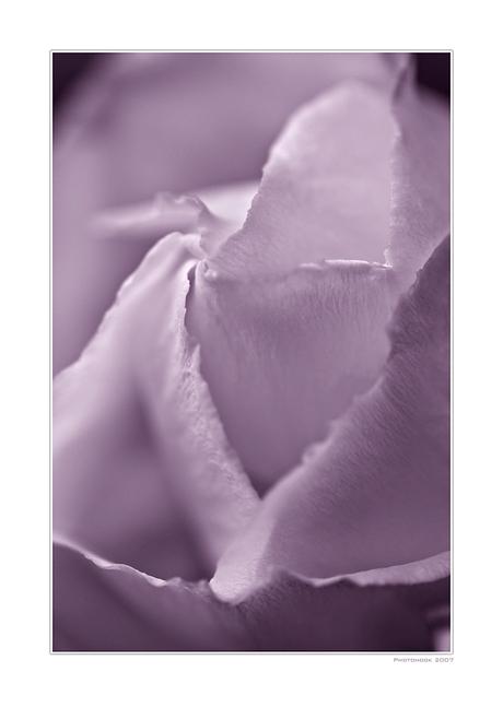 A Purple Dream IX